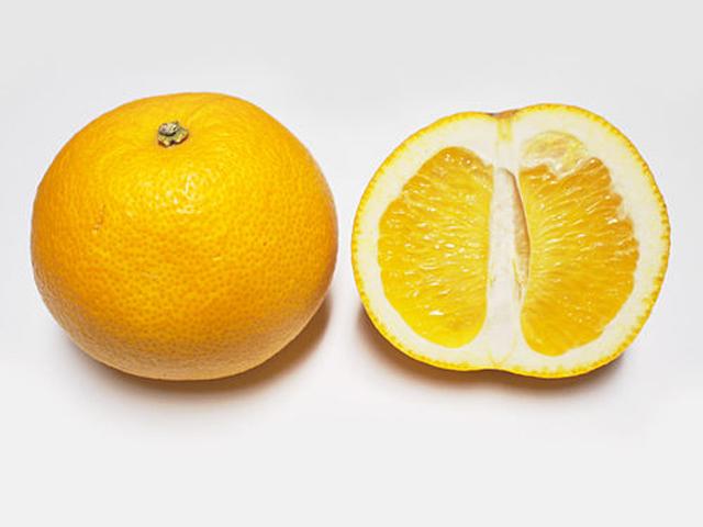 Hassaku_fruit_and_cross_section.jpg